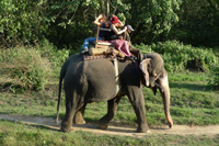 chitwan elephant safari