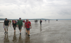 Morecambe Bay walk